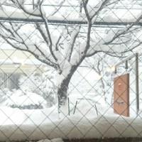 大雪警報発令中☆