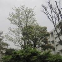 4/21 ランチタイムコンサートVol.88 嘉目真木子