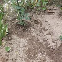 野菜の苗を植えた