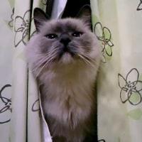 『猫が苦手』な猫