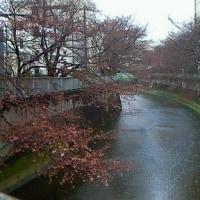 冷たい雨の降る日曜日