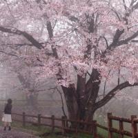 春雨にけむる 170411