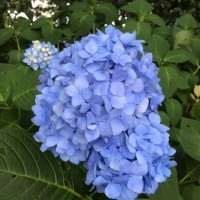梅雨空~紫陽花~そしてBIKE