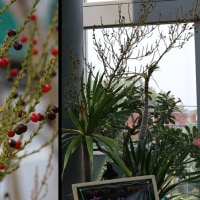 乾燥地植物 2