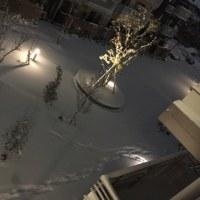 新潟市も雪!