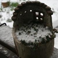 雪が降りはじめました