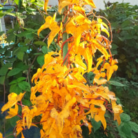 特段に黄色い葉