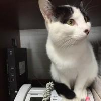 くーさん、電話の上にのる