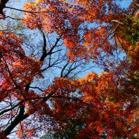 『城山紅葉』 旬のひと日