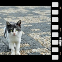 刑事さんの眼をした猫さん