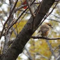 野鳥 鶴見緑地 1月9日