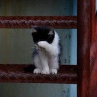 猫が顔をあらうと・・・