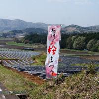 桜川の山桜ツーリング