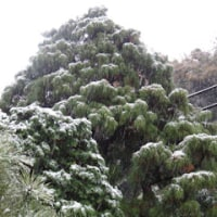 早い雪 -磯子ヴィレッジ-