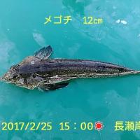 笑転爺の釣行記 2月25日☀ 久里浜・長瀬