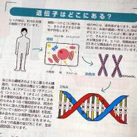 DHC遺伝子検査元気生活応援キットを試してみました。遺伝子検査で何がわかるの?!~唾液のとり方まで♪