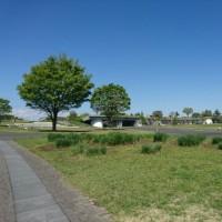 国営昭和記念公園☆2017春チューリップ