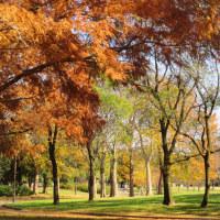 篠崎公園 心癒される場所です・・・・