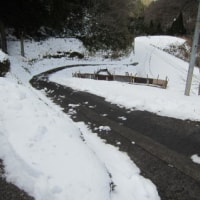 今冬はじめての雪かき