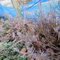 2月最終日 三寒四温で春へ!