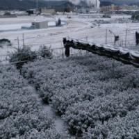 桂川マルシェは中止になりました