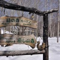 あさひかわ白樺樹液まつり(1/2)~残雪の中、森マルシェ