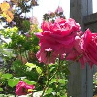 友人のお庭