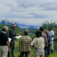 富谷町ブルーベリー生産組合が視察研修会を開催~ラビットアイブルーベリーの有望品種と先端技術の導入に向けて~