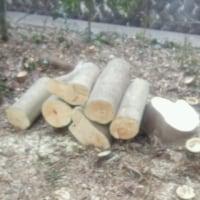 今日は、薪が手に入る。