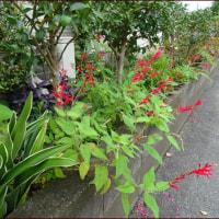 元気をくれる赤い花<今朝の庭10/27>