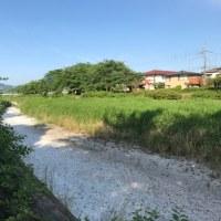 川が干上がっている(><)