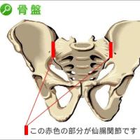注意!仙腸関節の治療の考え方     金沢市   腰痛治療法    整骨院