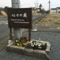 お花(*^^*)