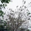荒川自転車道の樹木の緑の葉が存亡の危機です