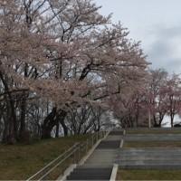 山形に桜訪ねて