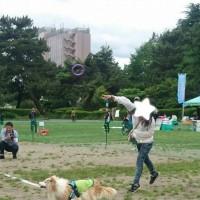 DogSportsSummit。