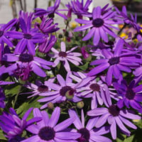 この花の名前