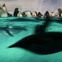 名古屋港水族館 (ペンギン舎) 18