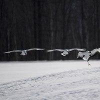 2..厳威の凍季
