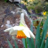 3月25日の花