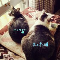 大っきい猫と小っちゃい猫