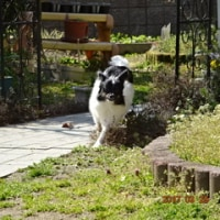 お庭遊び♪