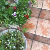 お花の植え替えができません!