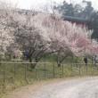 春の初めからもう3か月も過ぎて -6 ・・・ flash back early spring in Uratakao  -6