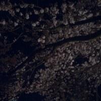 桜の下のキャンドルナイト