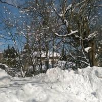 今季最後の雪景色??