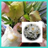 菜の花と花のプレゼント