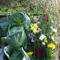 今朝の収穫。