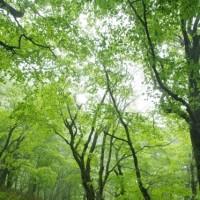 雨のブナッ子路「土湯峠まんてん道再開通式」(2017.5.28)