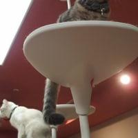 猫と触れ合う時間